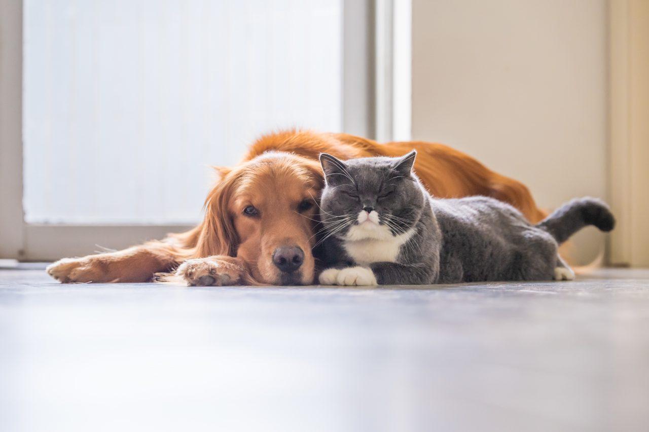 diabete in cani e gatti