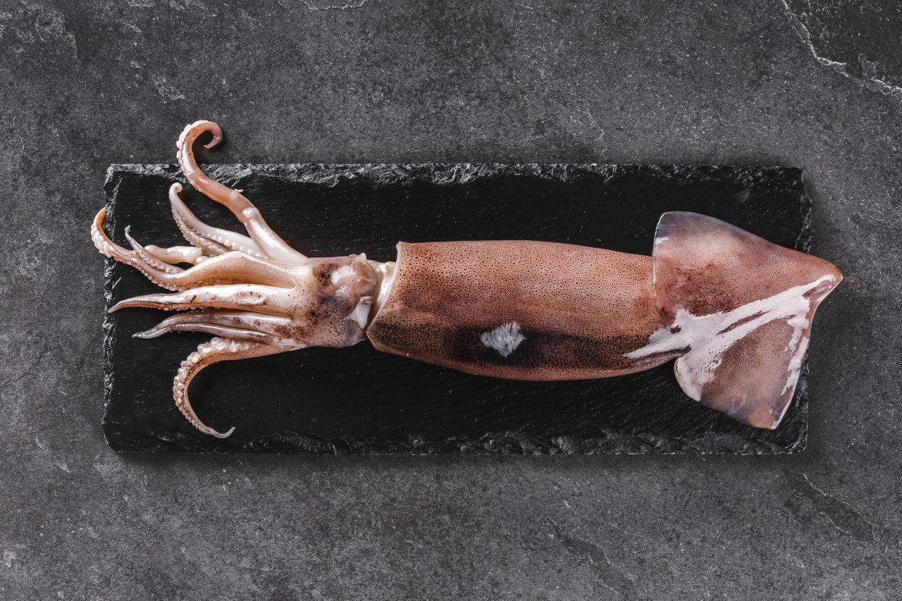 calamaro con funghi porcini